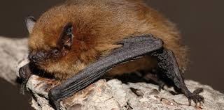 Batwork